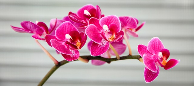 Domácí výrobky z jarních květů
