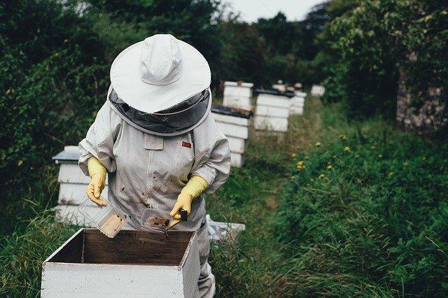 včelař, včely